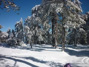 Et snebedækkede Troodos