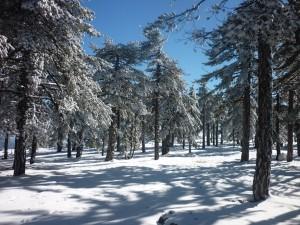 Troodos bliver fyldt med sne om vinteren (januar/februar).