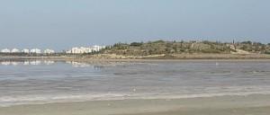 Billedet er taget ved en af saltsøerne nær Larnaca (kilde: wikimedia)